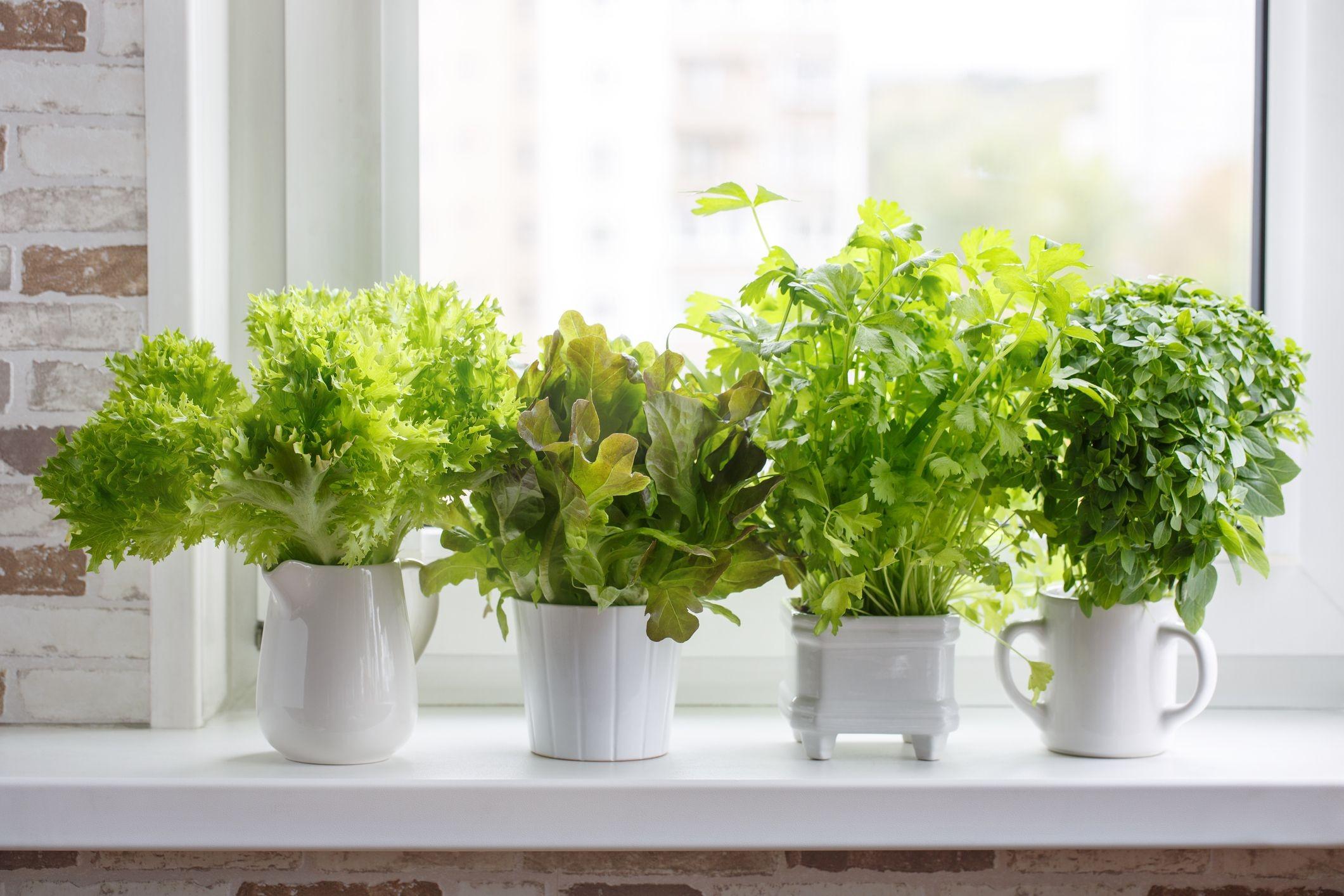 Dicas Para Fazer Seu Proprio Jardim de Vasos