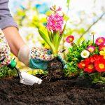 Instrucoes Para os Jardineiros Iniciantes