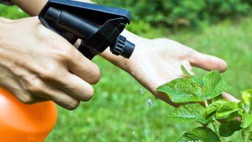 Maneiras Naturais de Controlar Pragas no seu Jardim